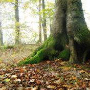 Baum, Wurzel, Fest, Stabil, Erde, Moos, Laub
