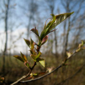 Wachstum, Frühling