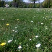 trauer wird leichter im Frühling