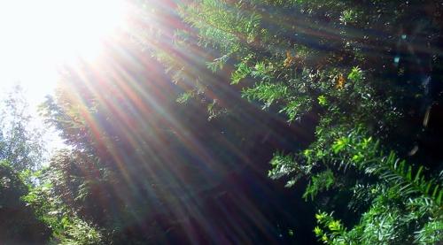 Sonne ist Lebenskraft